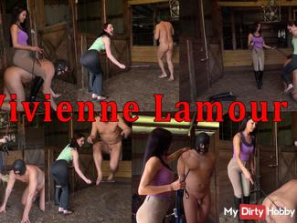 Pferdetraining im Stall