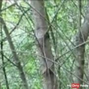 pi**en im Wald