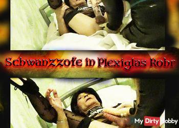 Schwanzzofe  in Plexiglas Rohr teil 1
